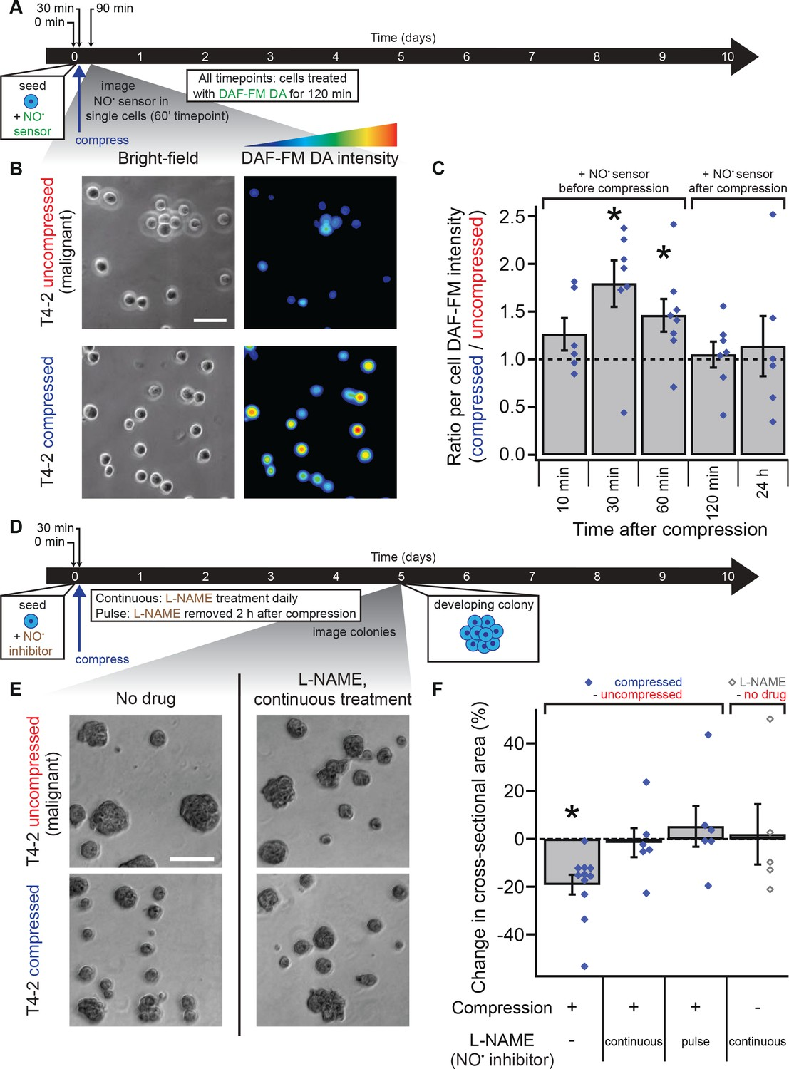 Transient external force induces phenotypic reversion of