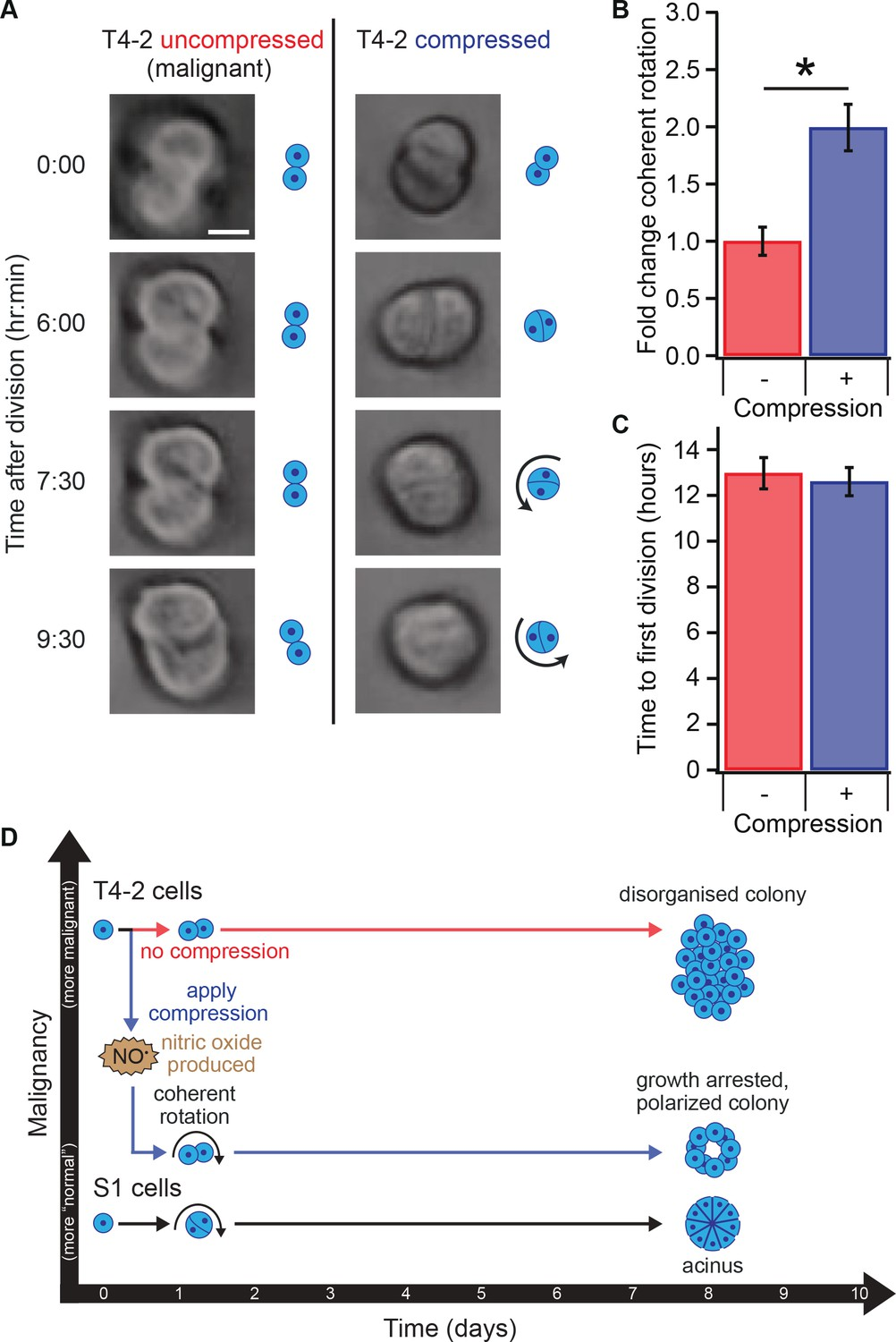 Transient external force induces phenotypic reversion of malignant