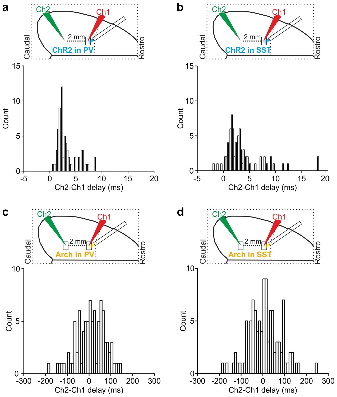 An inhibitory gate for state transition in cortex | eLife