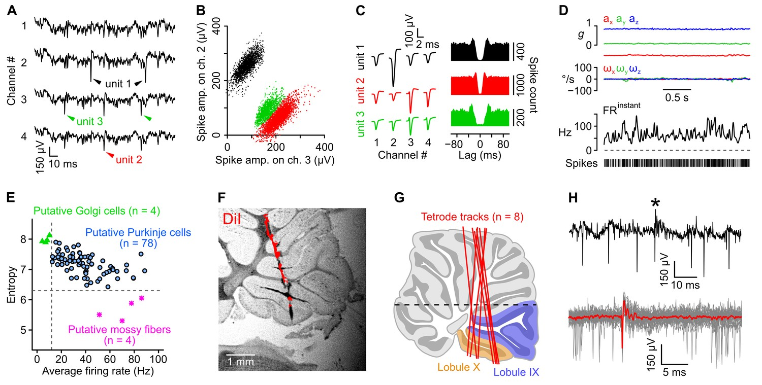 Cerebellar Re Encoding Of Self Generated Head Movements Elife Wire Size Chart In Addition Baldwin Organ Lifier Schematics On 200 Isolation And Classification Recorded Units