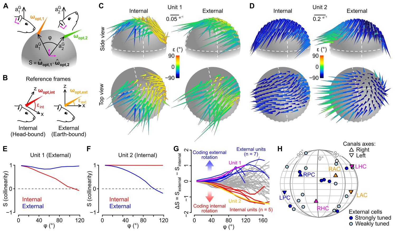 Cerebellar re-encoding of self-generated head movements | eLife