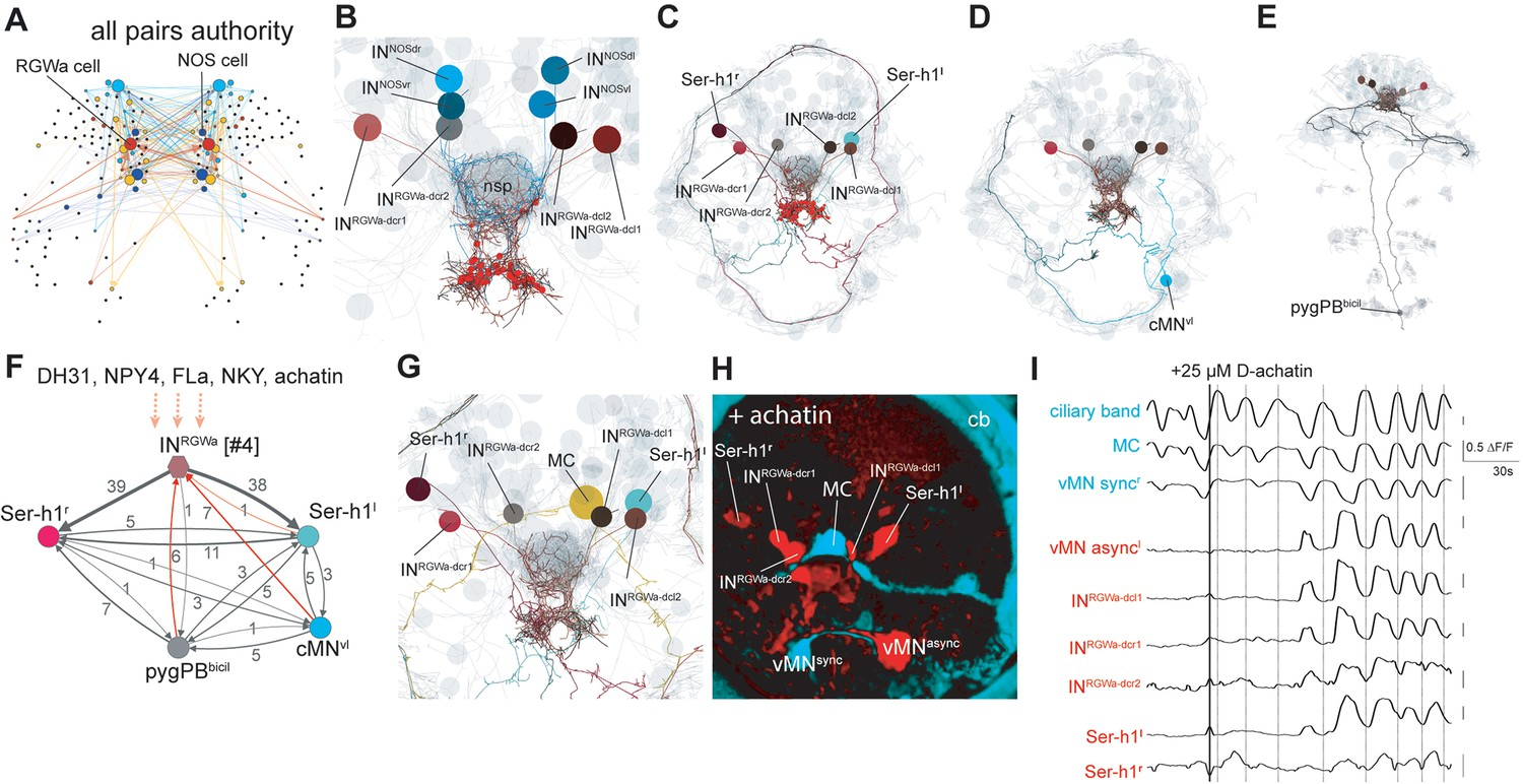 Synaptic and peptidergic connectome of a neurosecretory center in