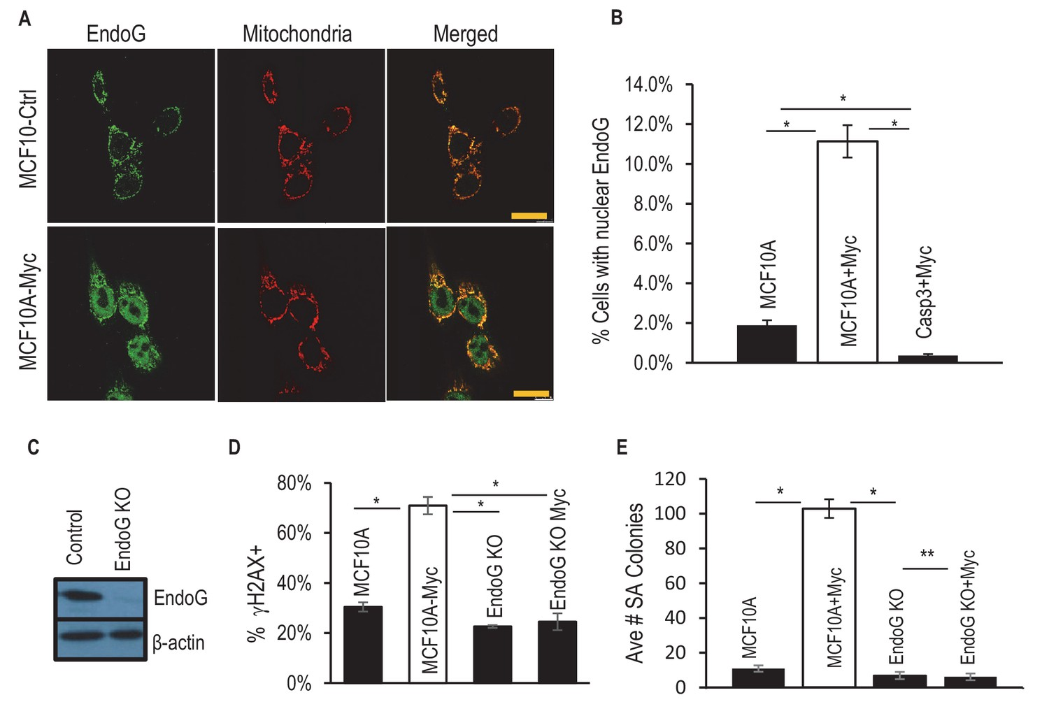 Essential roles of Caspase-3 in facilitating Myc-induced