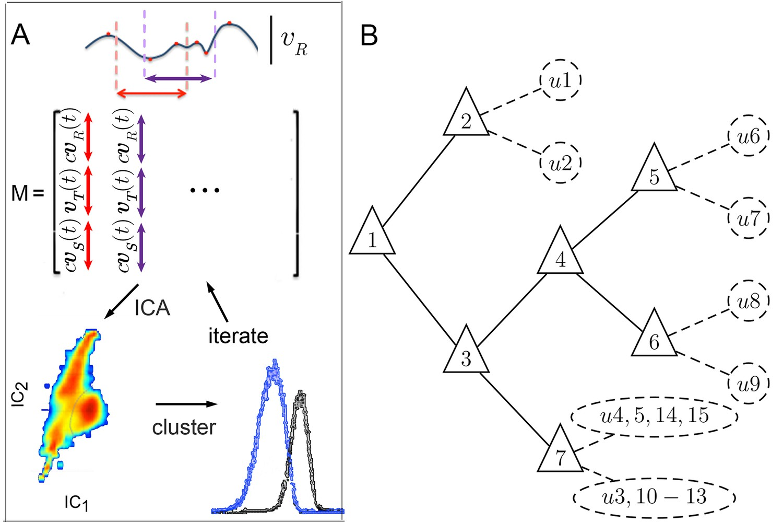 Dynamic structure of locomotor behavior in walking fruit