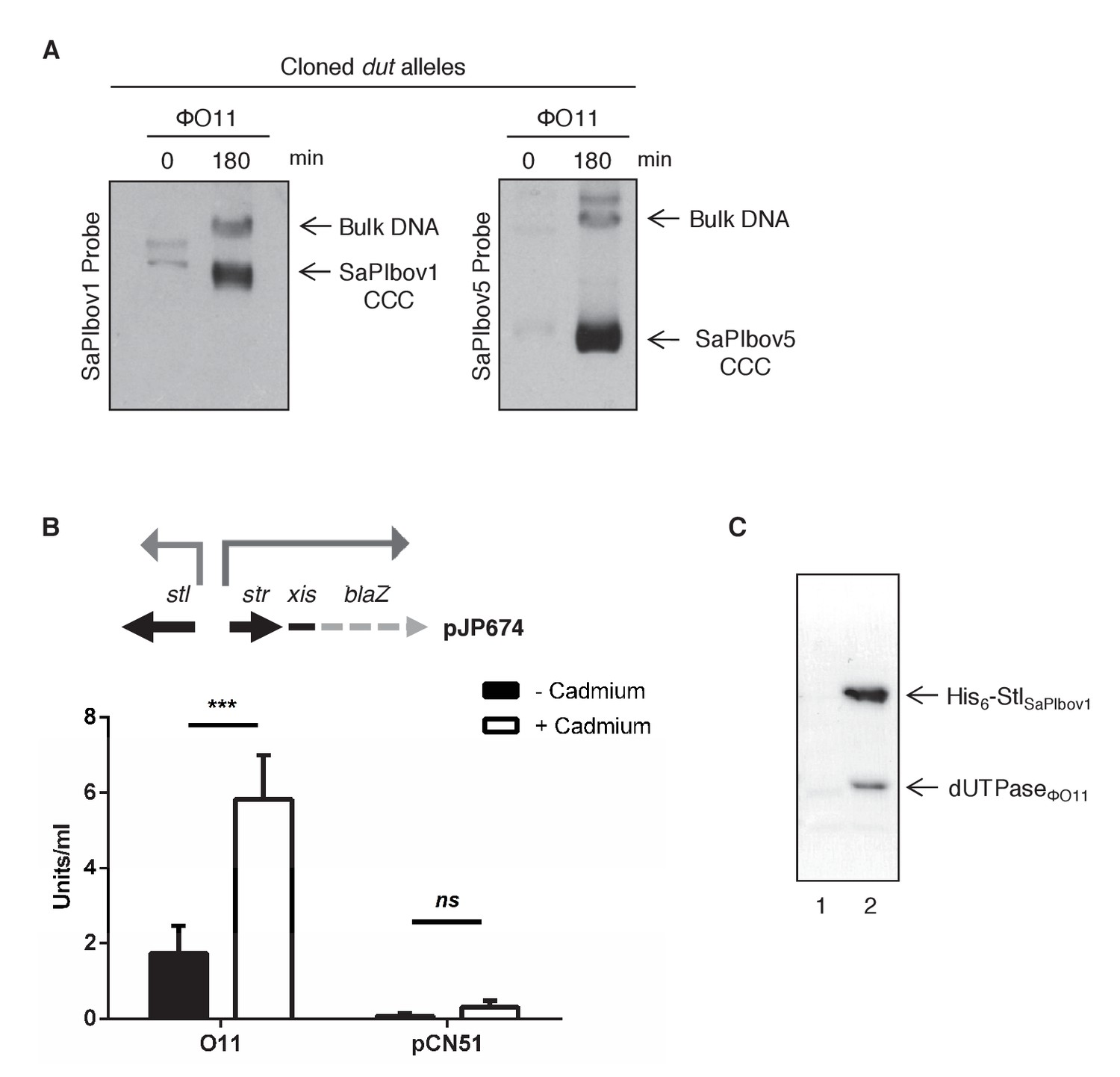 Pirating Conserved Phage Mechanisms Promotes Promiscuous