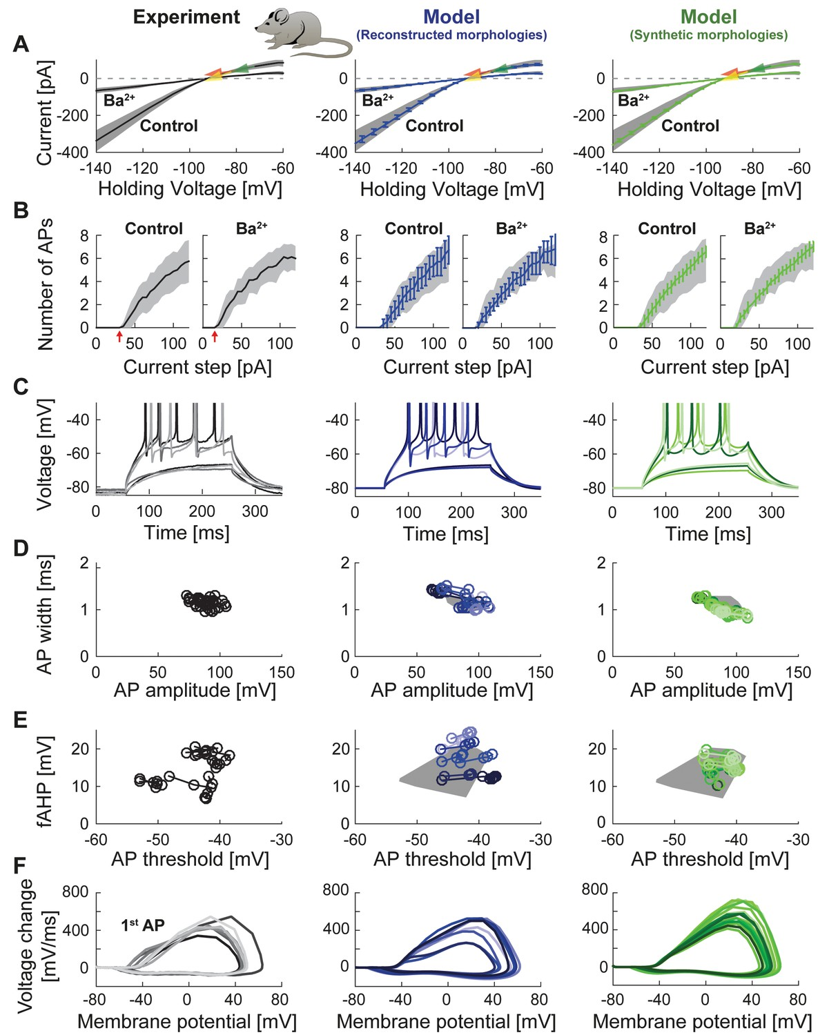 T2n As A New Tool For Robust Electrophysiological Modeling Tree 325 Proximity Switch Wiring Diagram Passive And Active Properties Of The Mature Mouse Gc Model
