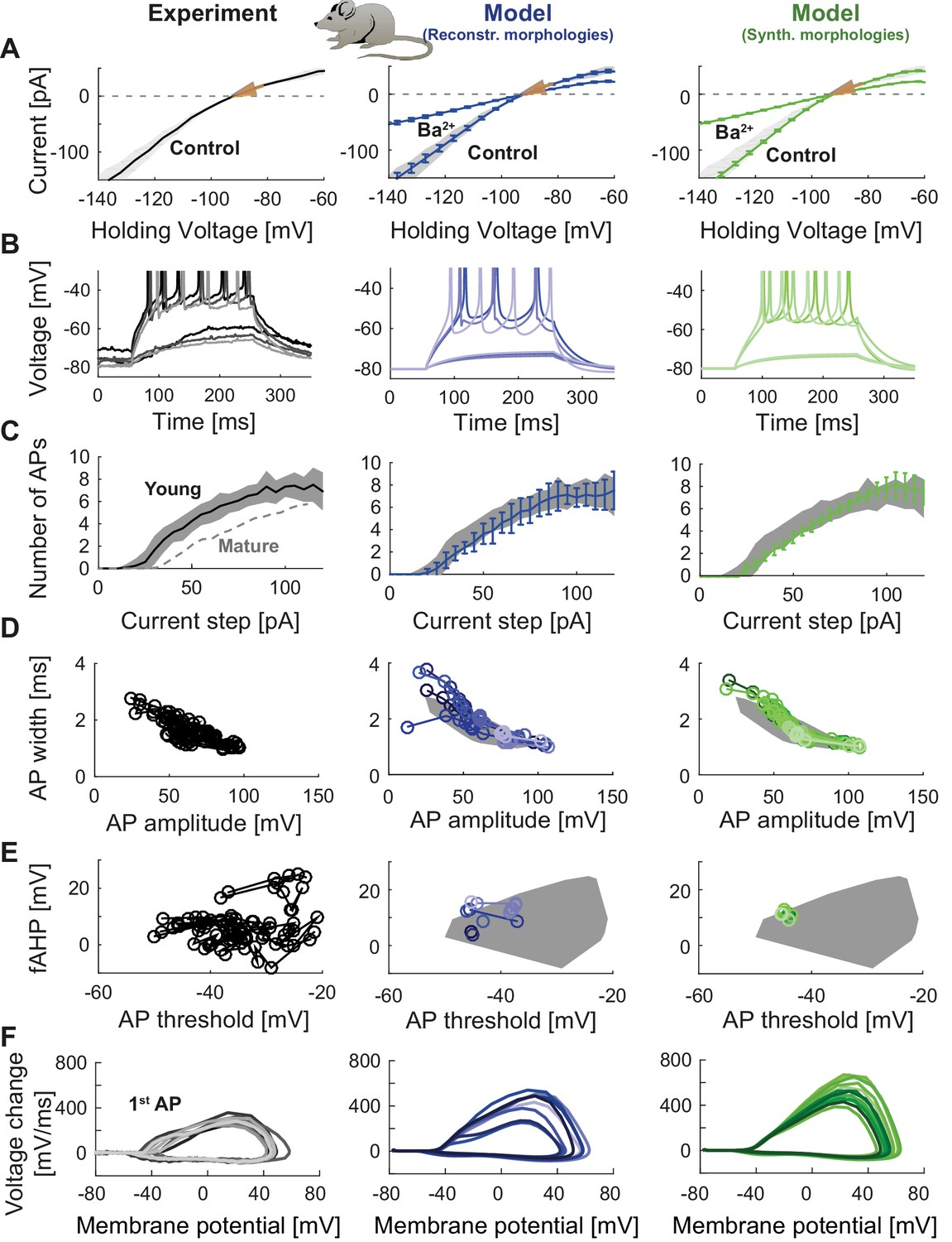 T2N as a new tool for robust electrophysiological modeling