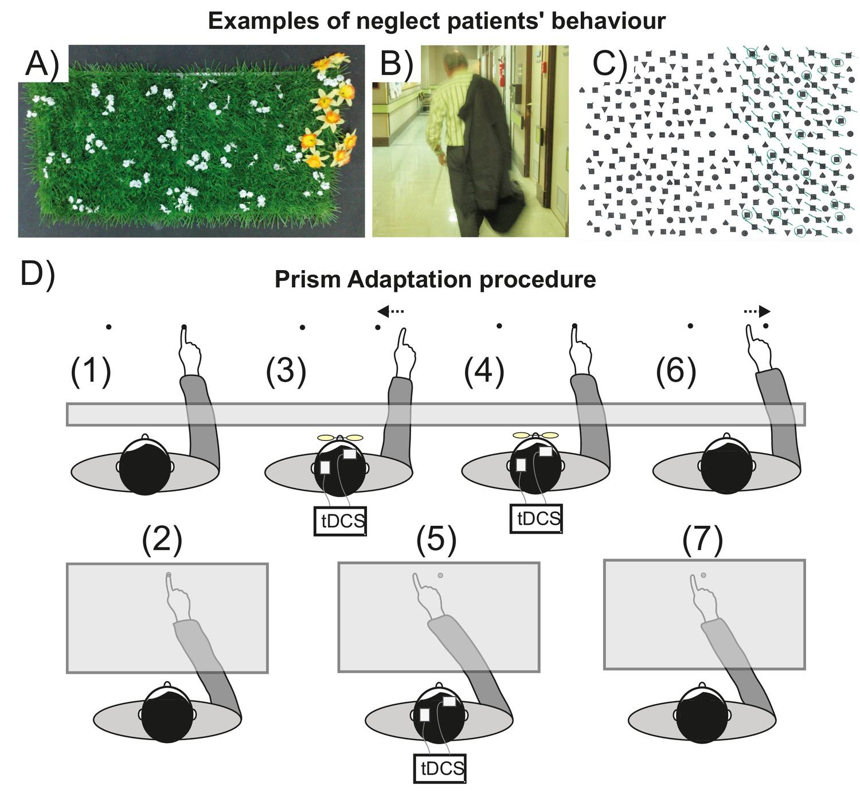 Figures and data in Induced sensorimotor cortex plasticity