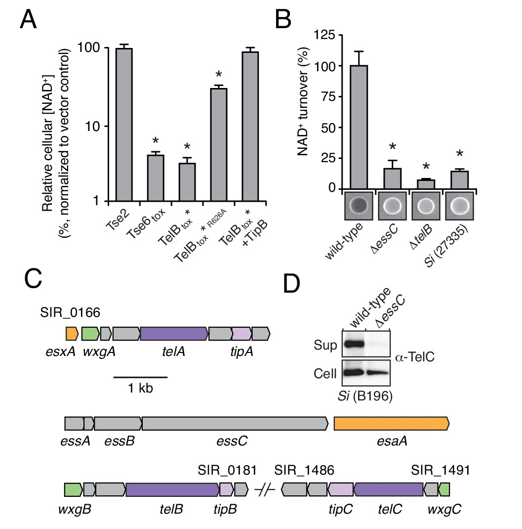 A Broadly Distributed Toxin Family Mediates Contact Dependent