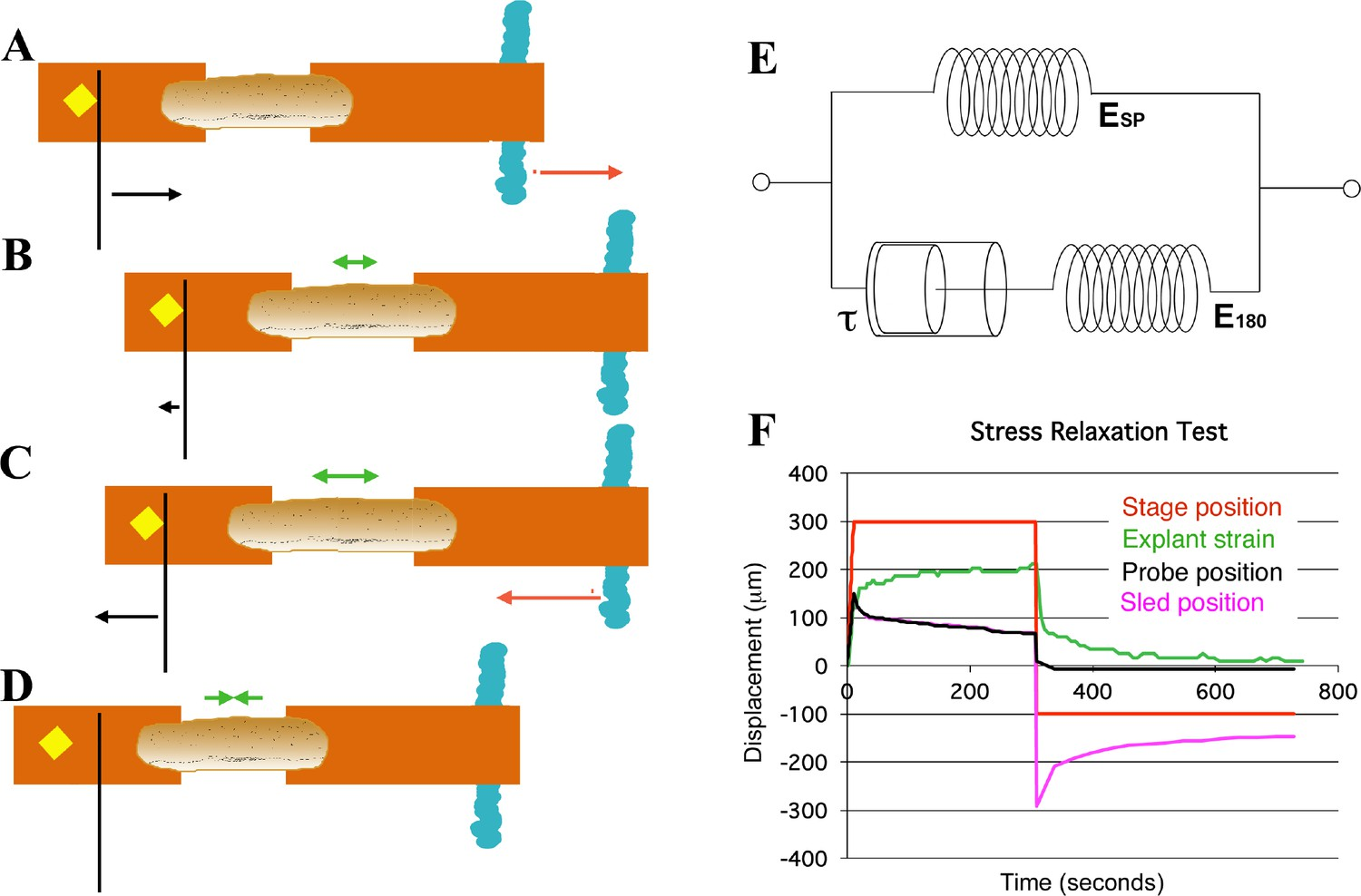 Large Long Range Tensile Forces Drive Convergence During Xenopus Bcs 460 Wiring Diagram Schema Of Movements And Measures Involved In Stress Relaxation Test