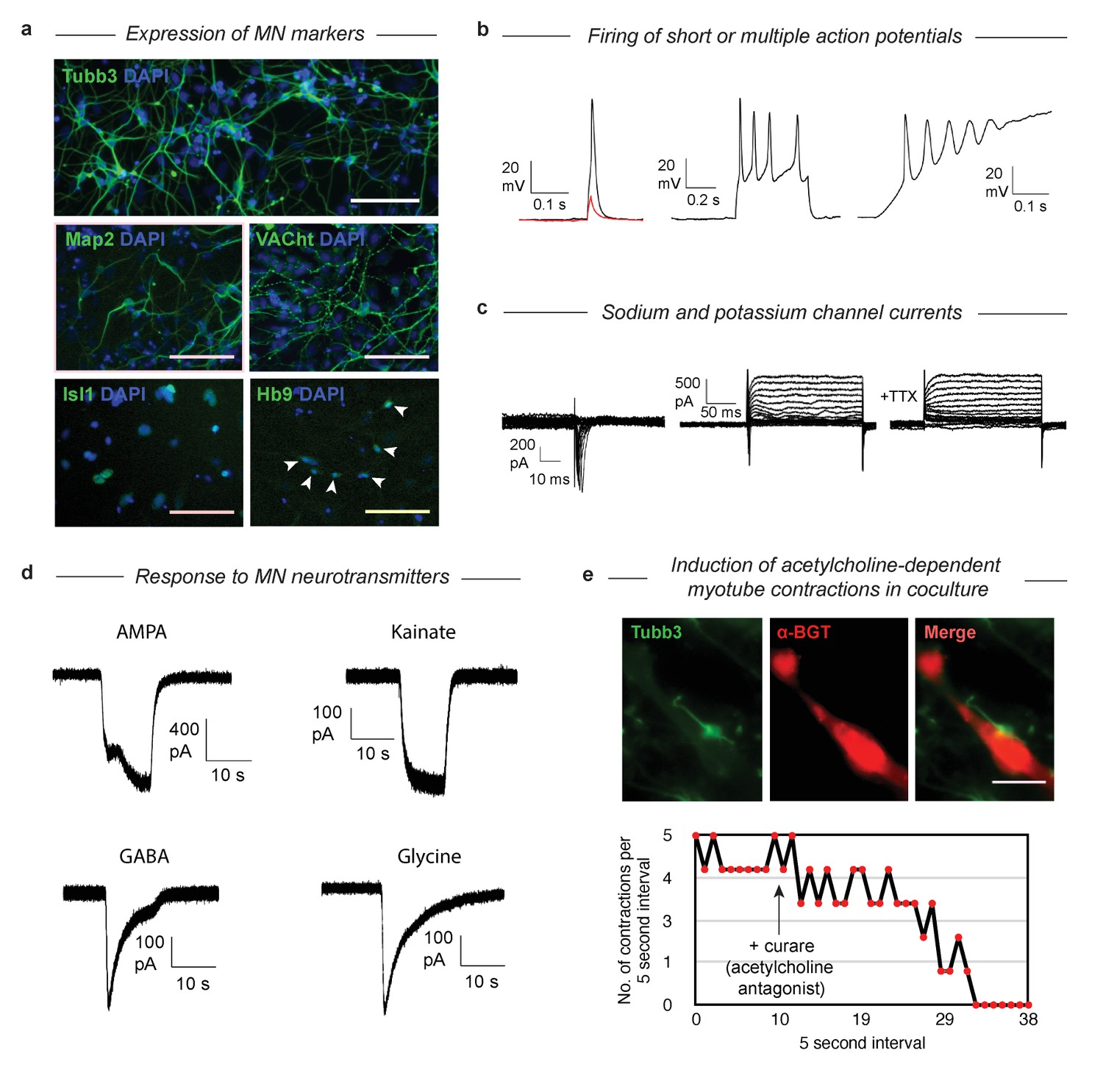 Mouse Embryonic Stem Cells Can Differentiate Via Multiple Paths To Clifford Matrix 1 Wiring Diagram Validation That Dp Become Functional Mns Despite Their Abnormal Differentiation Trajectory