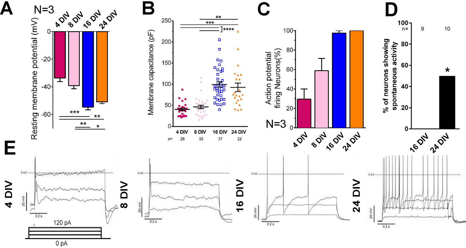 Selective Rab11 Transport And The Intrinsic Regenerative Ability Of Anatomy A Short Circuit Open Electrical Maturation Neurons