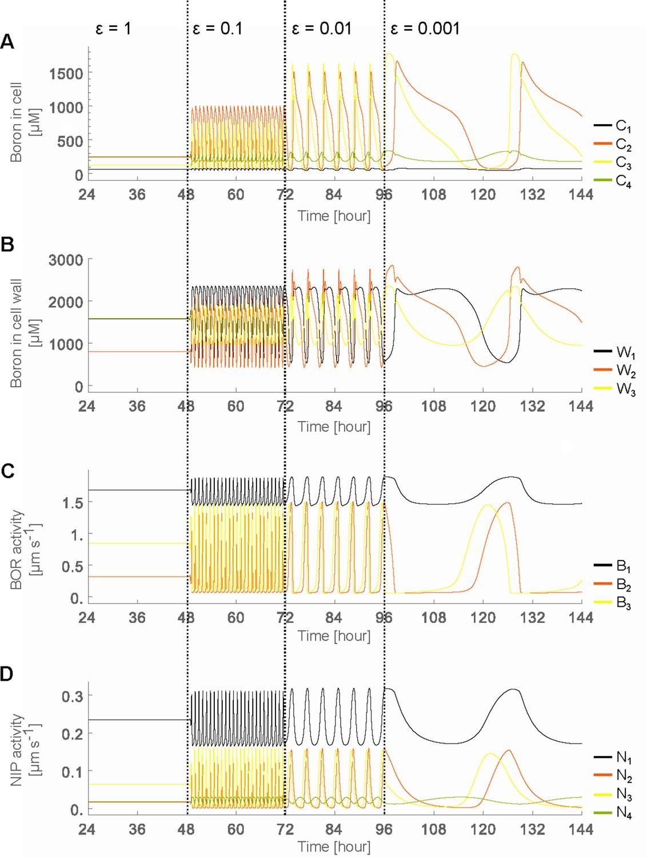 Rapid Transporter Regulation Prevents Substrate Flow Traffic Jams In Process Diagram For Jam Oscillatory Behaviour Arises Due To Decreased Swiftness