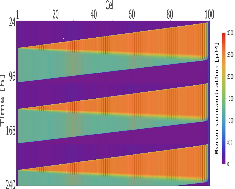 Rapid transporter regulation prevents substrate flow traffic