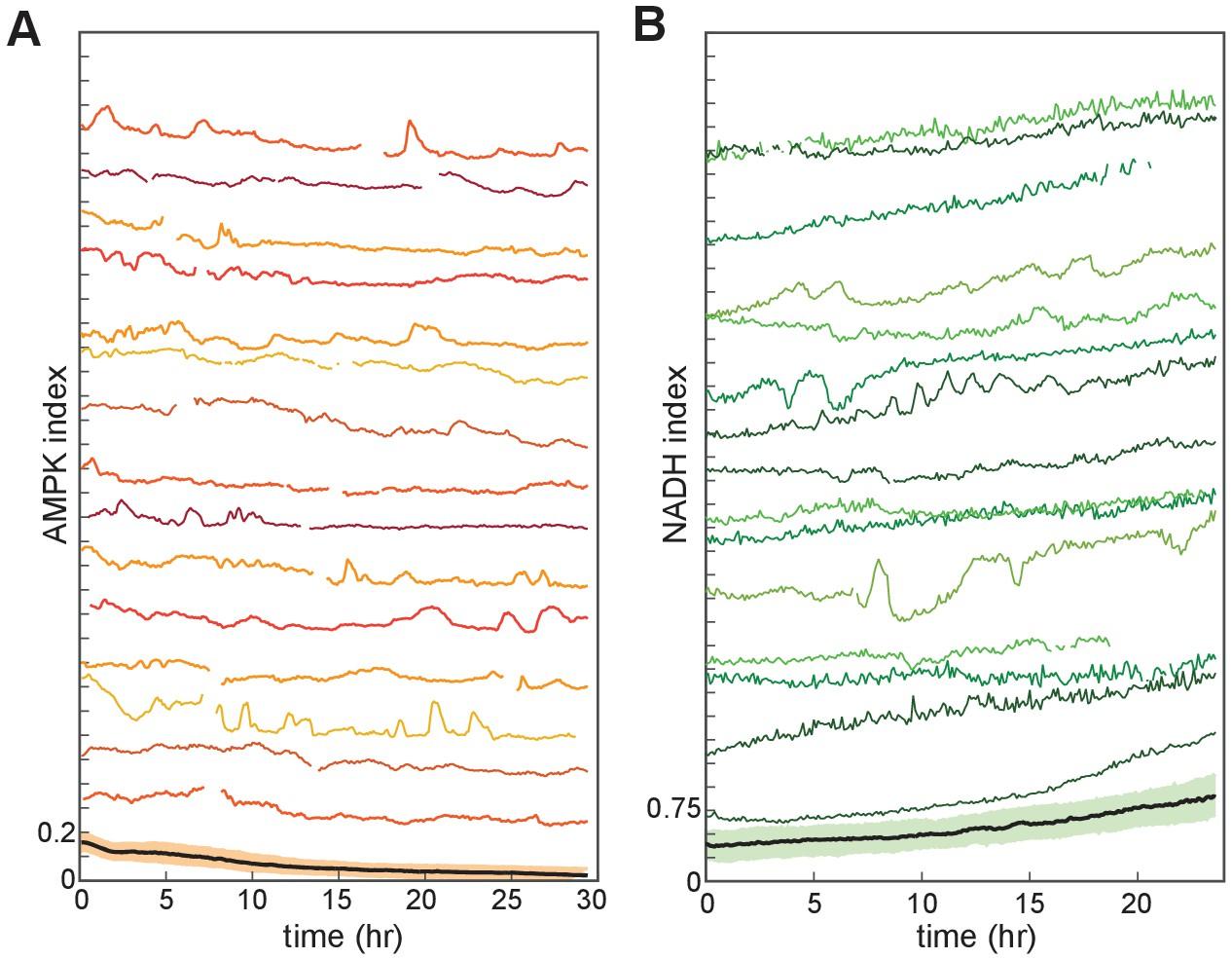 Akt regulation of glycolysis mediates bioenergetic stability