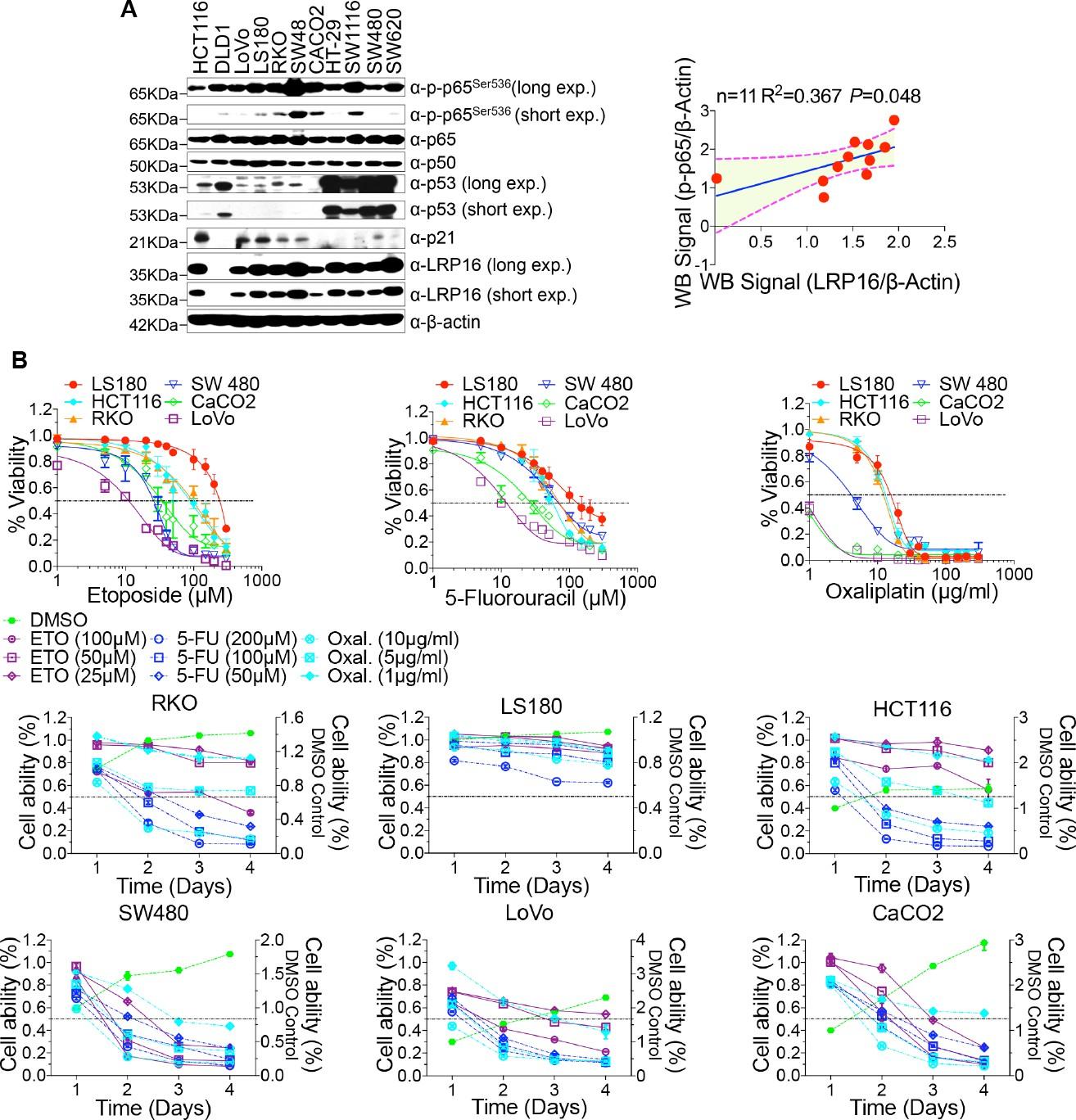 Blockade of the LRP16-PKR-NF-κB signaling axis sensitizes