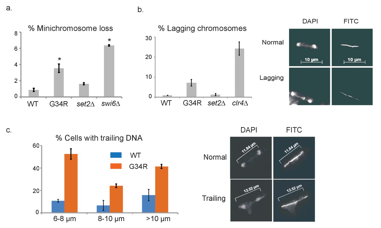 Histone H3G34R mutation causes replication stress