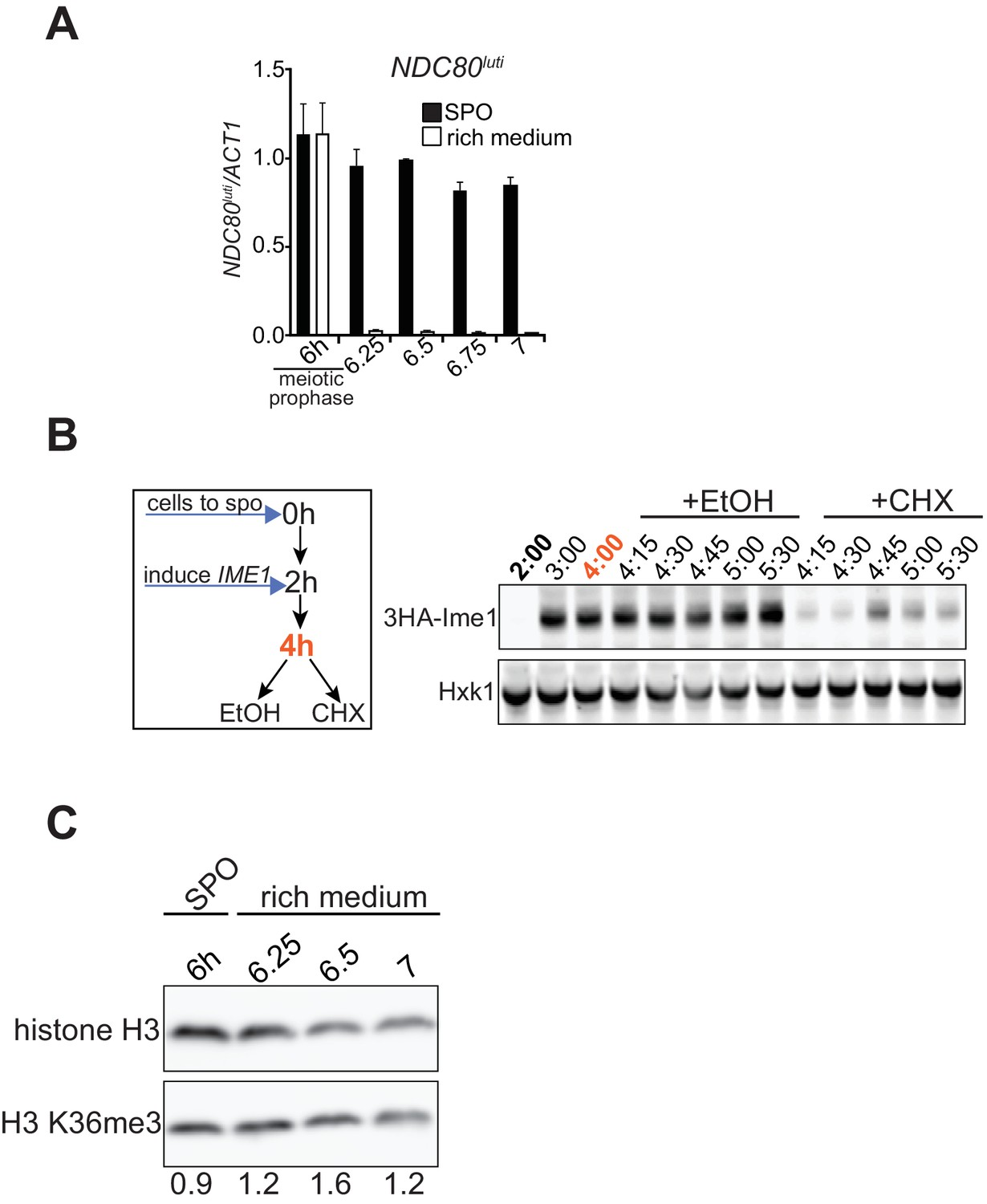 Transcription Of A 5 Extended Mrna Isoform Directs Dynamic Process Flow Diagram Nylon 6 Ndc80luti Mediated Repression Is Reversible