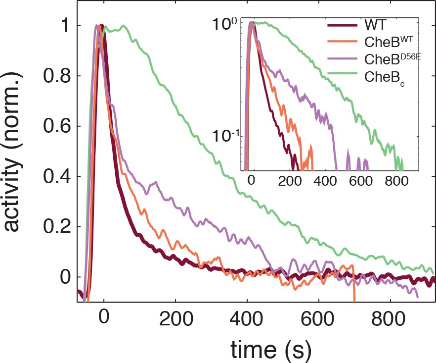 Phenotypic diversity and temporal variability in a bacterial