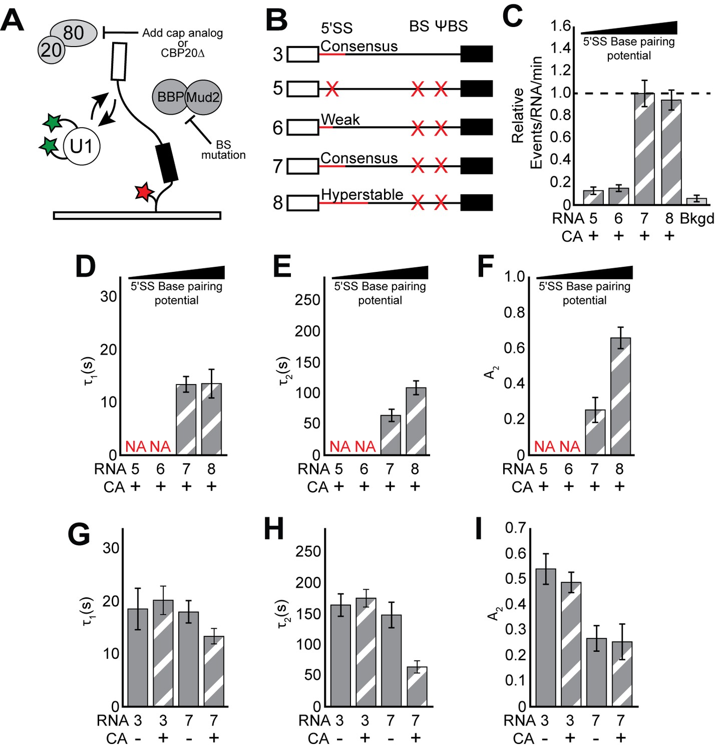 Dynamics and consequences of spliceosome E complex formation | eLife