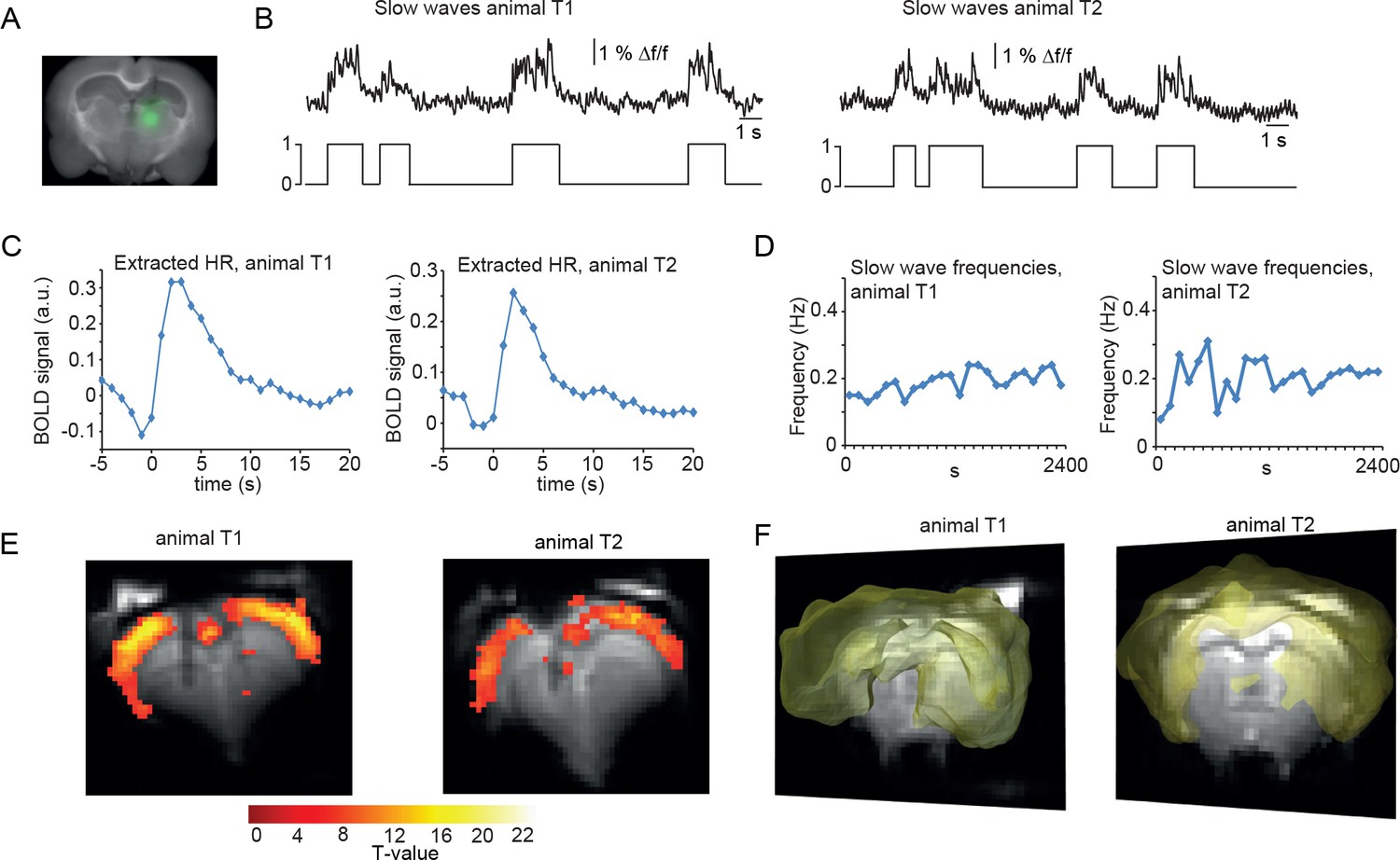 Cortex-wide BOLD fMRI activity reflects locally-recorded slow