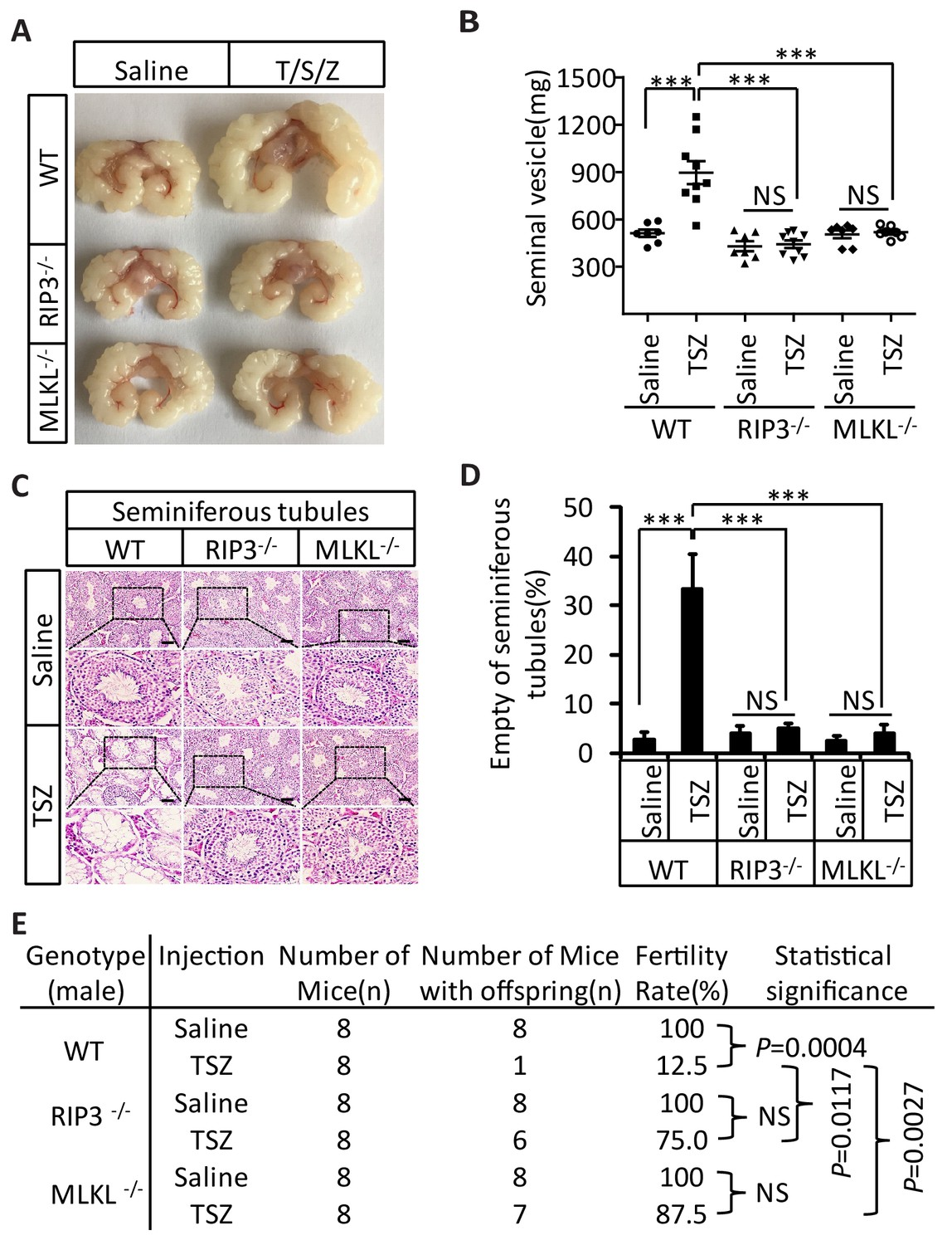 Ripk1 Ripk3 Mlkl Dependent Necrosis Promotes The Aging Of Mouse Male