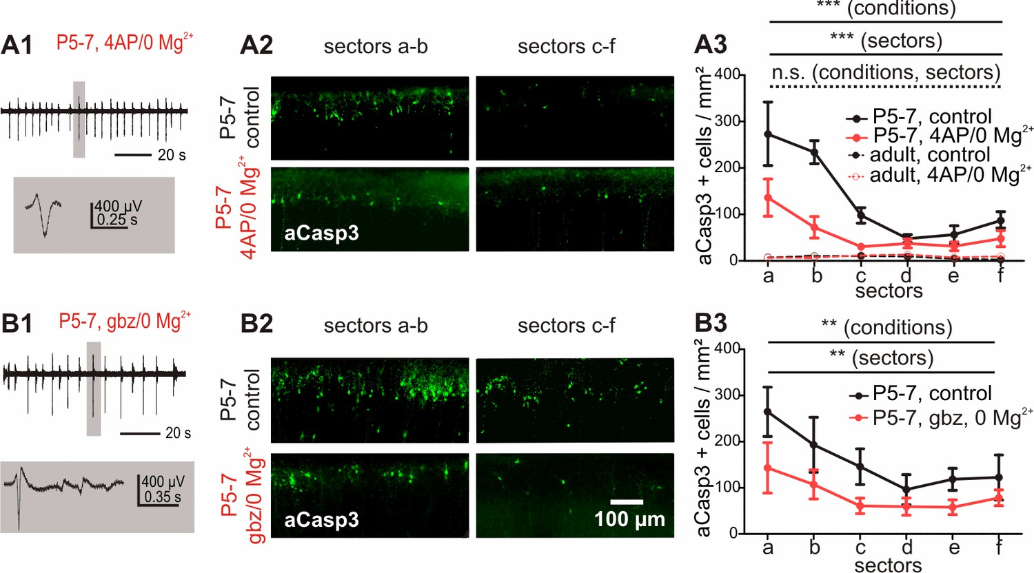 Electrical Activity Controls Area Specific Expression Of Neuronal Circuit Breaker Panel Diagram Besides 7 Segment Display On Increased In Vitro Causes A Reduction Apoptosis