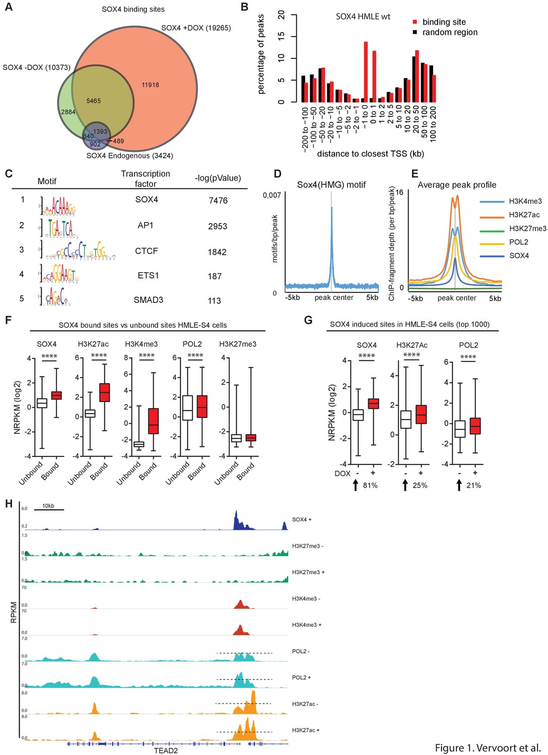 Global transcriptional analysis identifies a novel role for SOX4 in