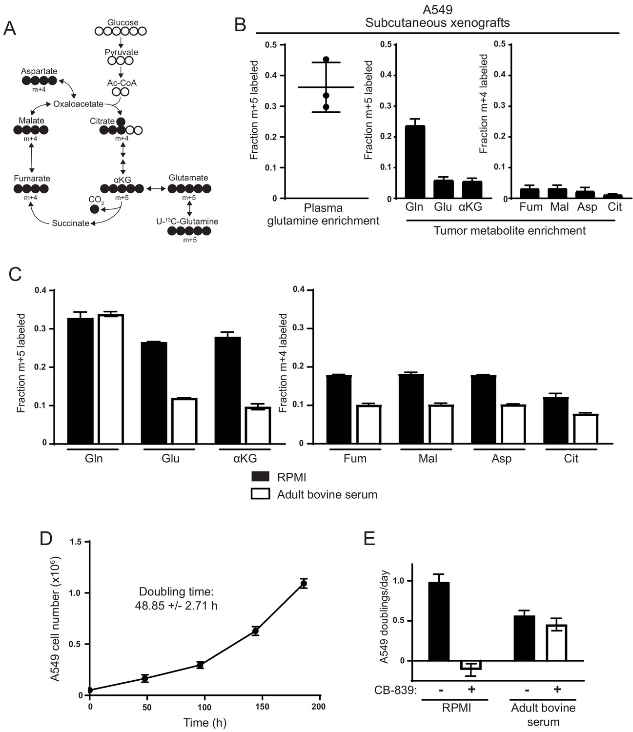 Environmental Cystine Drives Glutamine Anaplerosis And Sensitizes Besides Dish Work Rf Modulator On Wiring Diagram Decreased Use Of For Tca Cycle By A549 Cells In Tumors When Cultured Adult Bovine Serum Compared To Rpmi