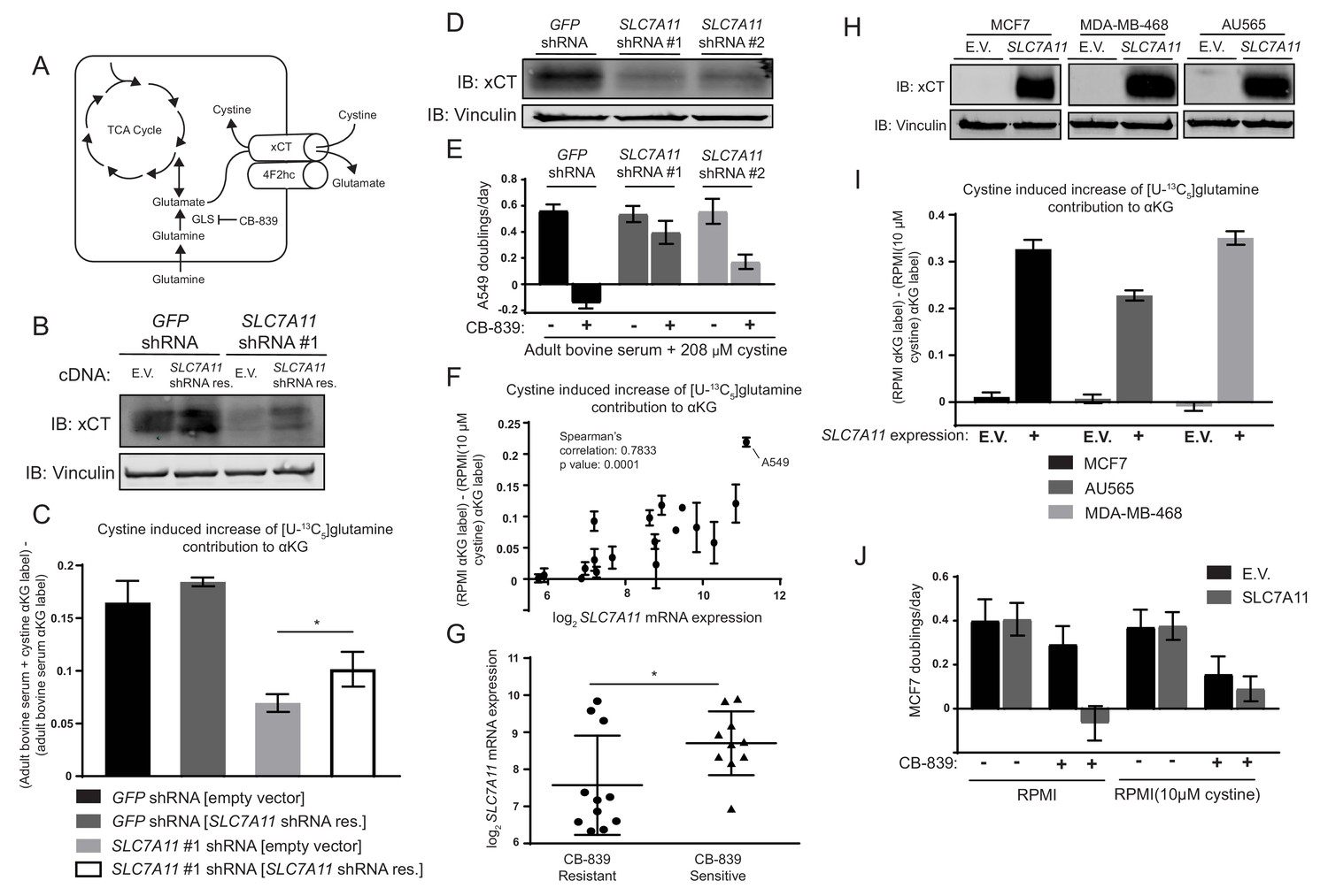 Environmental Cystine Drives Glutamine Anaplerosis And Sensitizes Ledcircuitcalculator Circuit Playground 163 Resistor Power The Glutamate Antiporter Xct Slc7a11 Is Necessary Sufficient For Induced Cb 839 Sensitivity