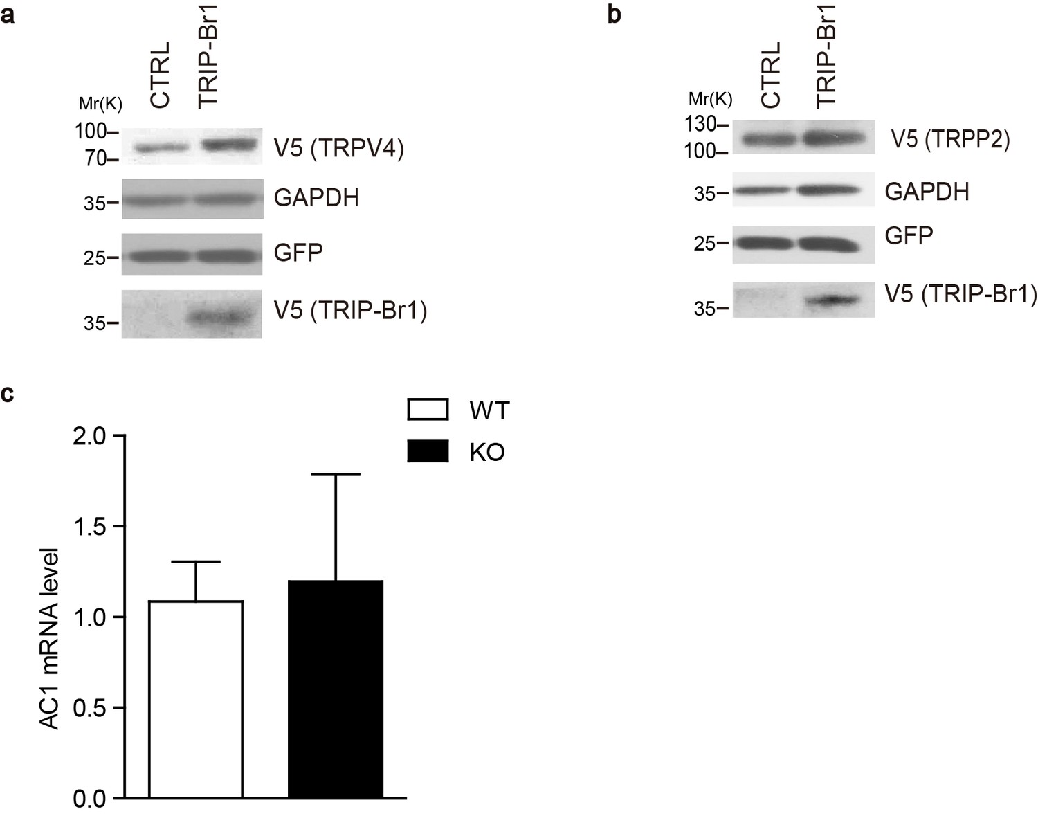 The Complex Of Trip Br1 And Xiap Ubiquitinates Degrades Multiple Randall 102 Central Heating Timer Wiring Diagram Effect On Expression Other Membrane Proteins Ac1 Mrna Levels