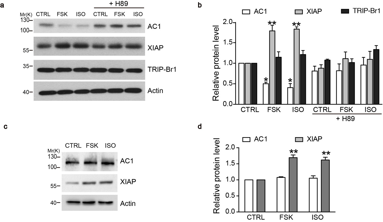 The Complex Of Trip Br1 And Xiap Ubiquitinates Degrades Multiple Randall 102 Central Heating Timer Wiring Diagram Camp Agonists Promote Upregulation Ac1 Degradation In A Pka Dependent Manner Macrophages Wild Type But Not Knockout Mice