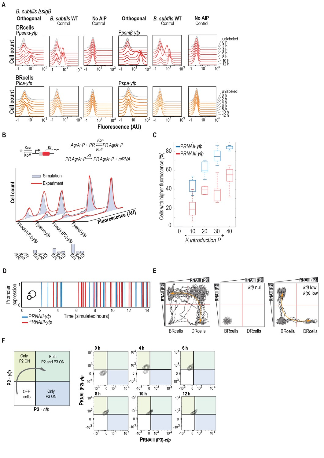 Cell Differentiation Defines Acute And Chronic Infection Types Hm 103 Microphone Wiring Diagrams Mathematical Simulations Of The Agr Orthologous System