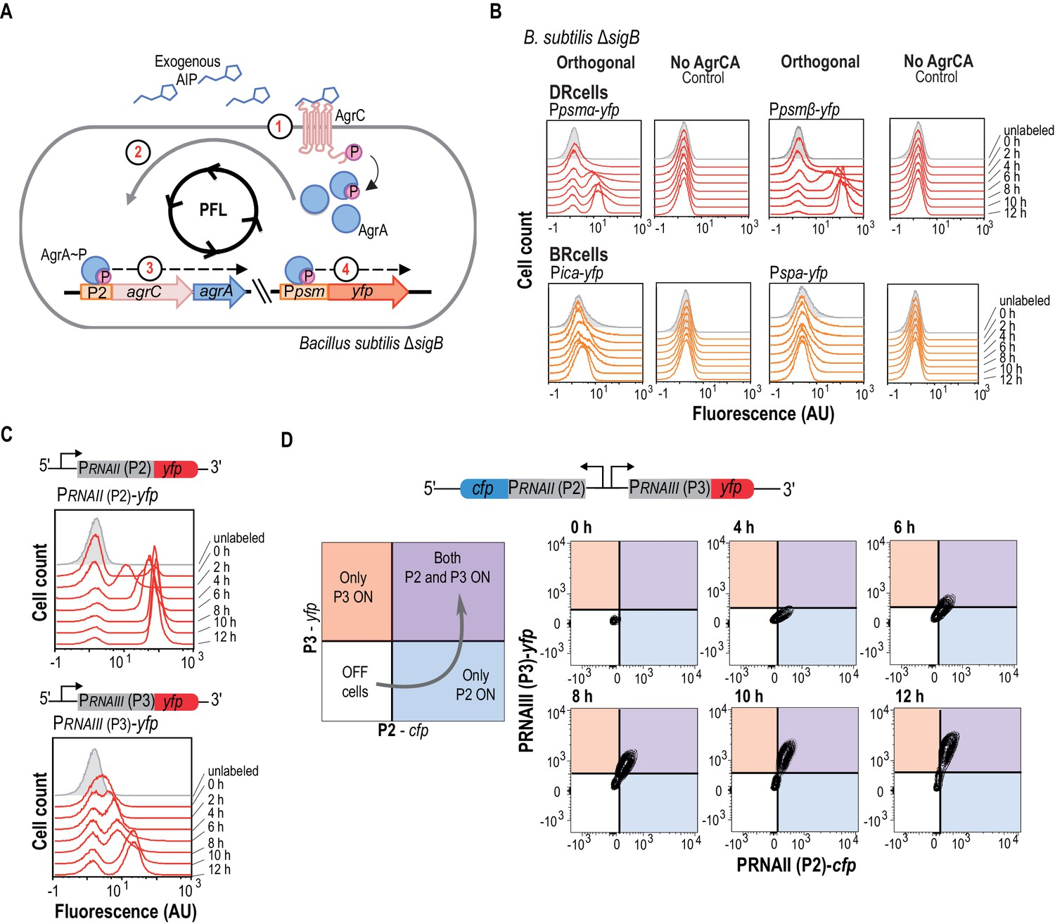 Cell Differentiation Defines Acute And Chronic Infection Types Hm 103 Microphone Wiring Diagrams The Agr Qs System Is An Autonomous Program For Fate Decision Making