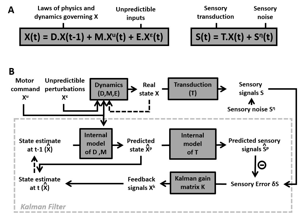 A unified internal model theory to resolve the paradox of active
