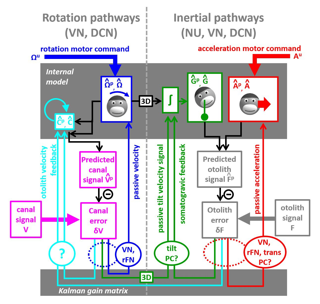 A Unified Internal Model Theory To Resolve The Paradox Of Active Led Light Organ Circuit Diagram Circuits Lab Schematic Central Vestibular Computations