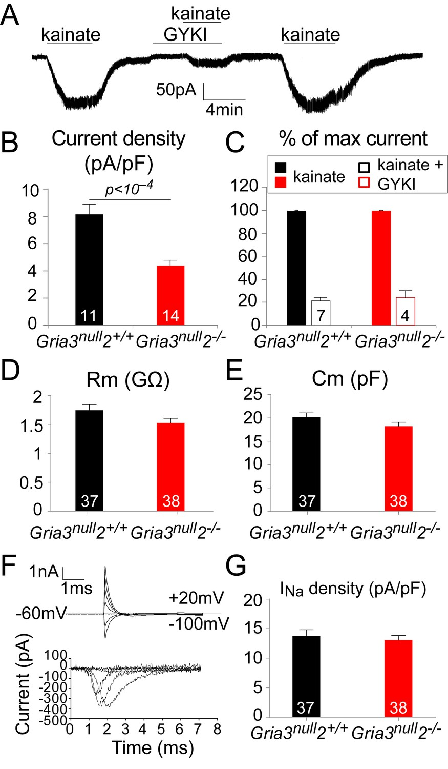 Signalling Through Ampa Receptors On Oligodendrocyte Precursors Adjustment Power Supply Values 125 15v Max Current 05 Amp The Kainate Evoked In Ops Is Reduced Gria3null2 Mice