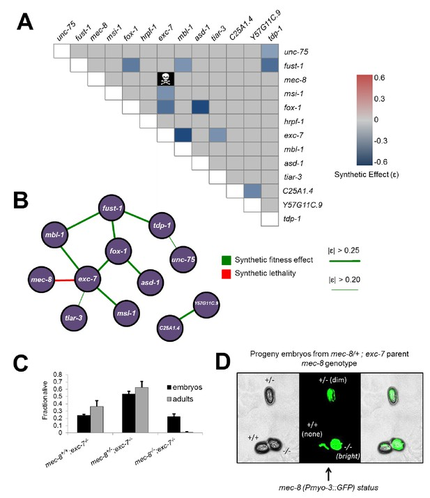 CRISPR-mediated genetic interaction profiling identifies RNA binding