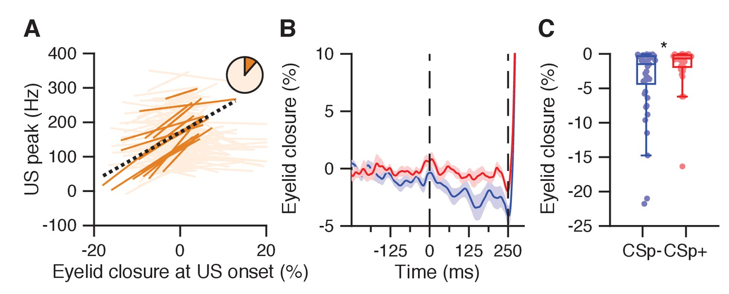 Dynamic Modulation Of Activity In Cerebellar Nuclei Neurons During Differentiator Circuit Besides Integrator Lifier Likewise Low Eyelid Opening The Cs Us Interval Relates To Reduced Peak And Absence Complex Spike