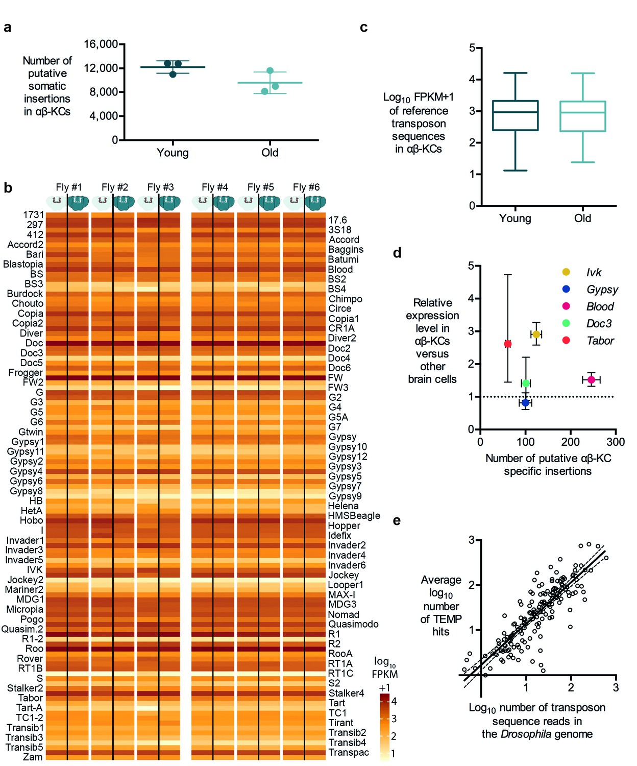 Resolving The Prevalence Of Somatic Transposition In Drosophila Elife Kawasaki G7 Wiring Diagram Transposon Copy Number And Putative Insertion Rates Do Not Correlate With Age Or Expression Levels