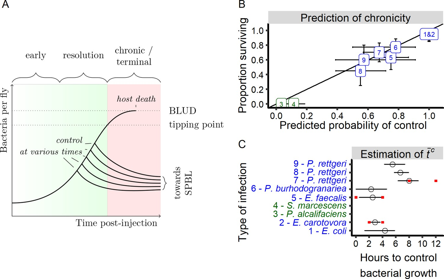 Stochastic variation in the initial phase of bacterial infection
