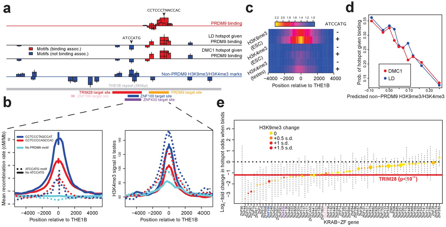 A Map Of Human Prdm9 Binding Provides Evidence For Novel Behaviors Simple Circuit Diagram Detecting Loss 4 20 Ma Signal Influences On Recombination In Cis Downstream