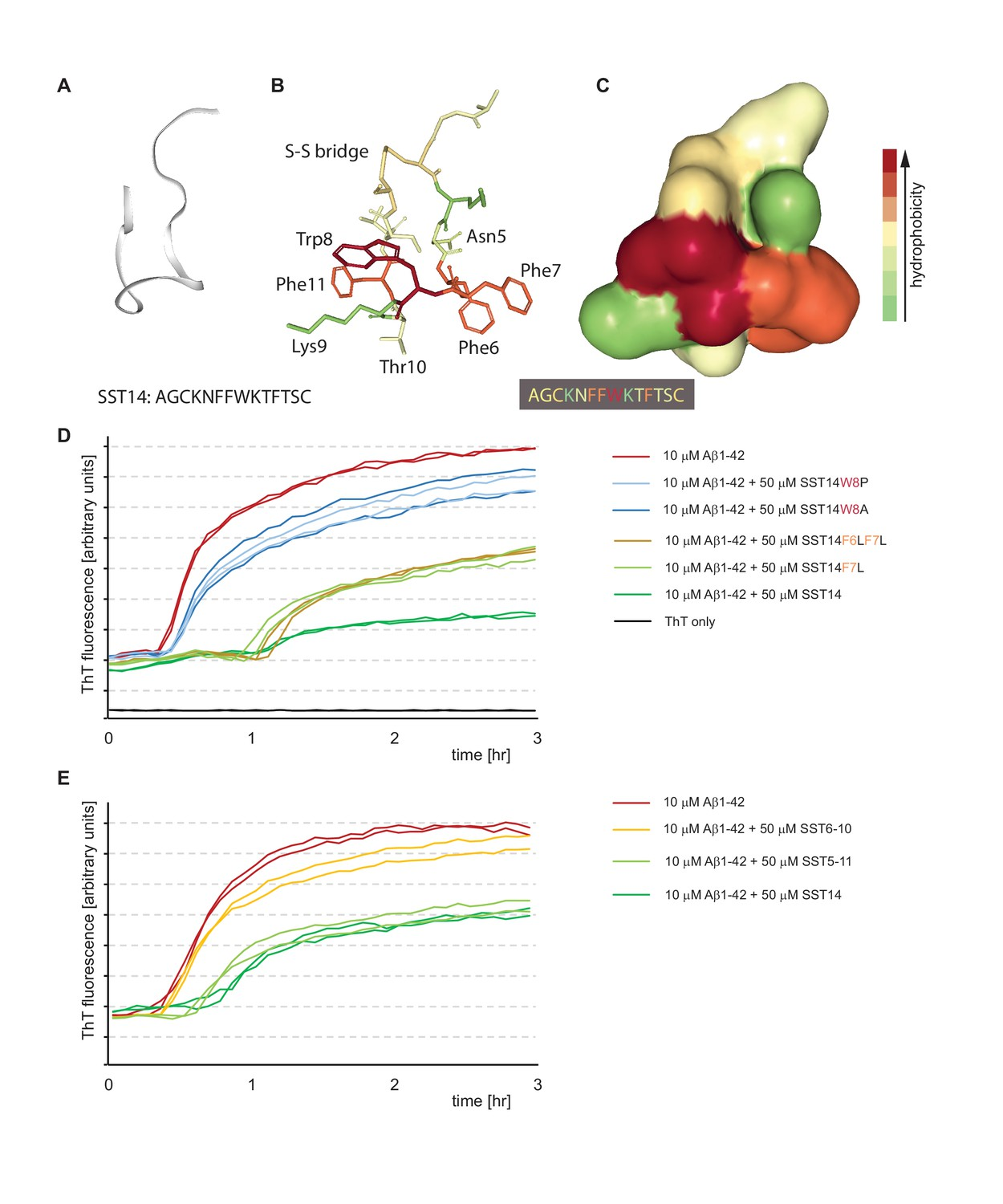 Somatostatin Binds To The Human Amyloid β Peptide And