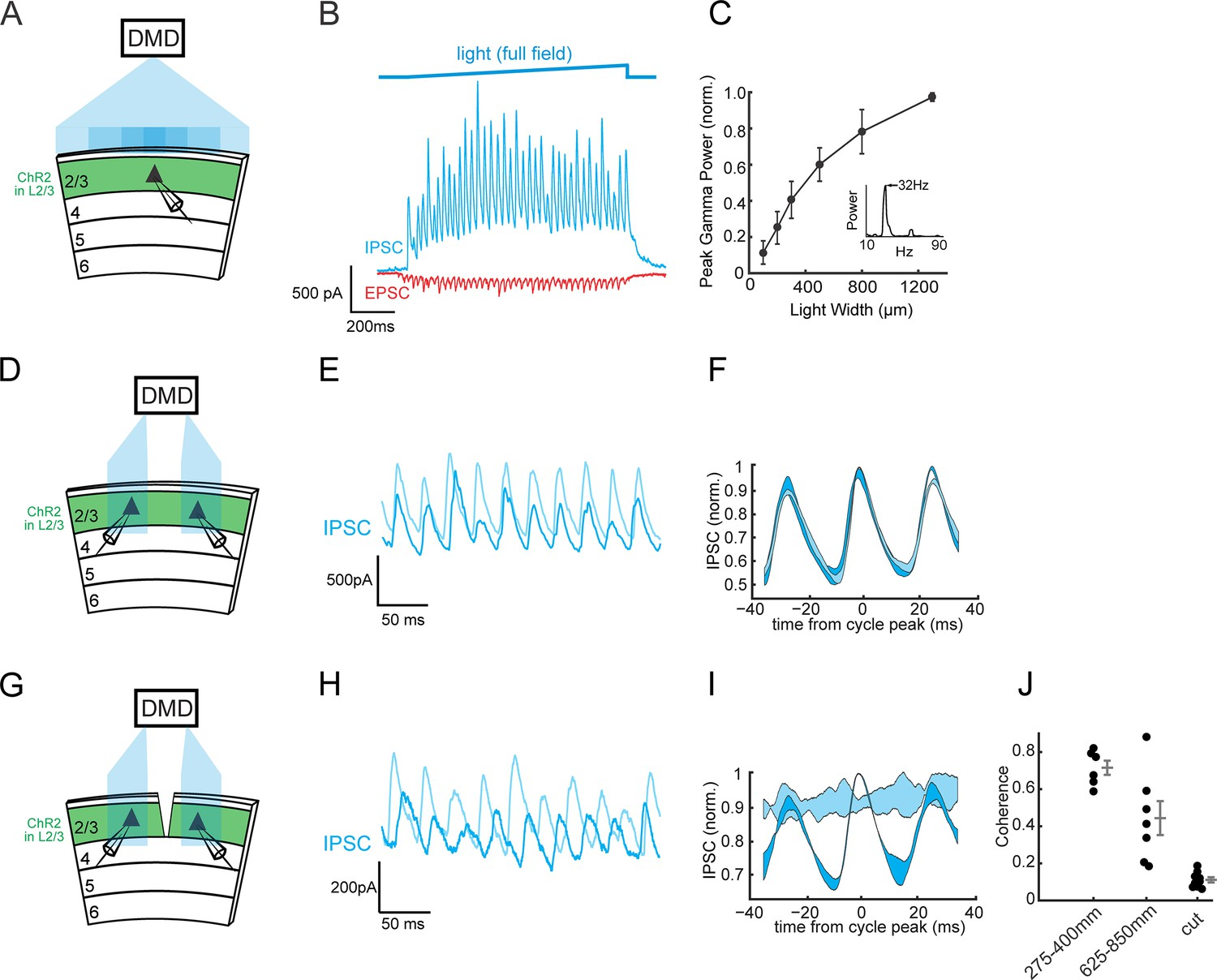 A Neural Circuit For Gamma Band Coherence Across The Retinotopic Map Electric Field Detector Horizontal Circuits Recruit Local Som Interneurons To Synchronize Distant Generators