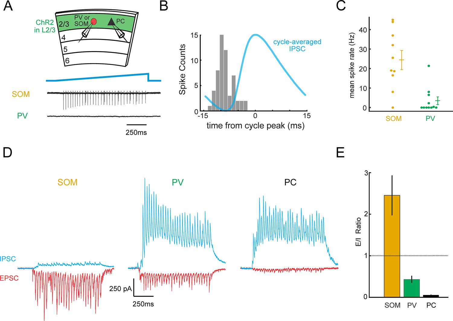 A Neural Circuit For Gamma Band Coherence Across The Retinotopic Map Moreover Series Parallel Problems Likewise Electrical L2 3 Rhythms Recruit Som Inhibitory Neurons