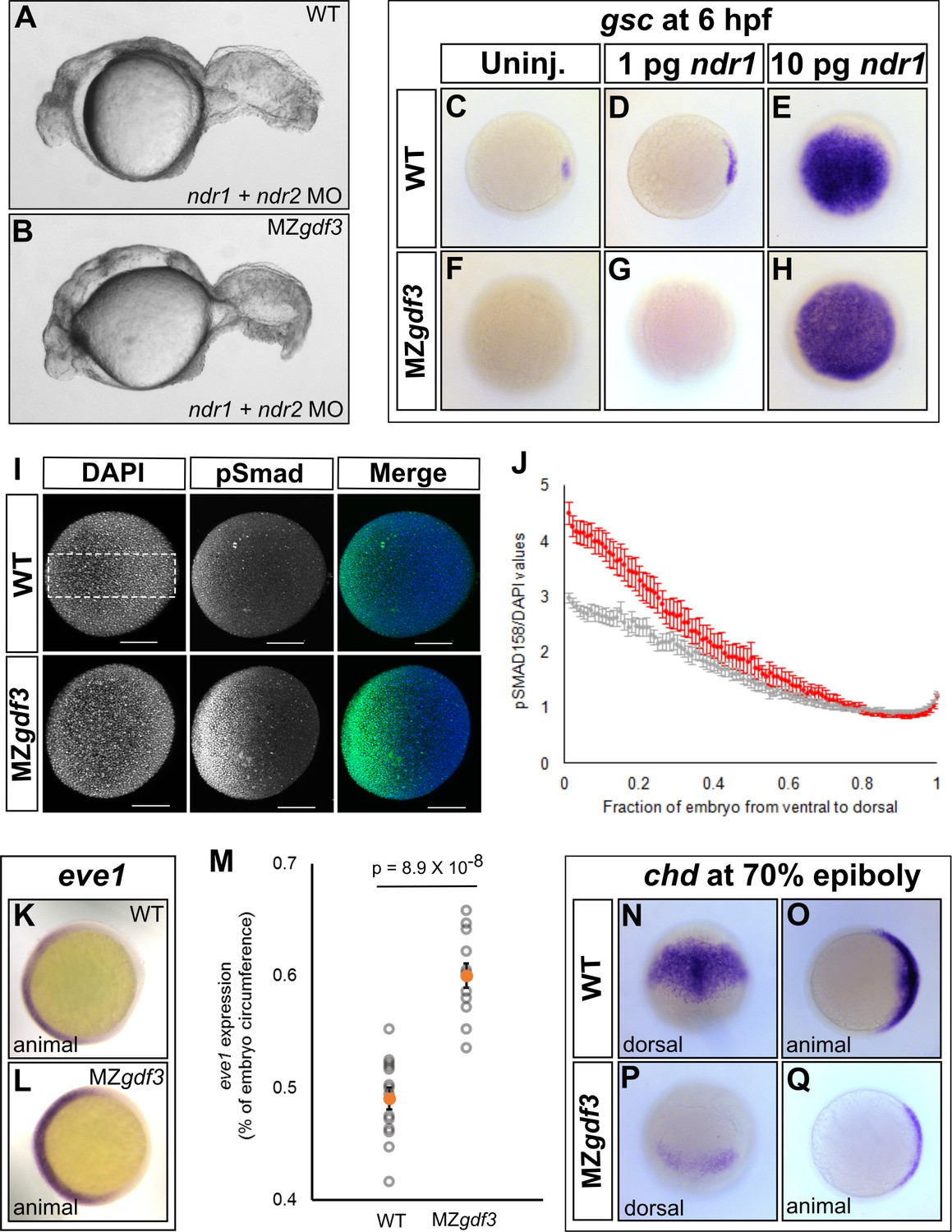 Gdf3 Is Required For Robust Nodal Signaling During Germ Layer Simple Circuit Diagram Detecting Loss Of 4 20 Ma Signal Leads To Expansion
