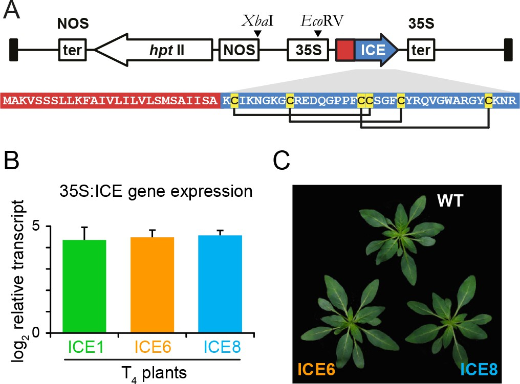 Antimicrobial peptide expression in a wild tobacco plant