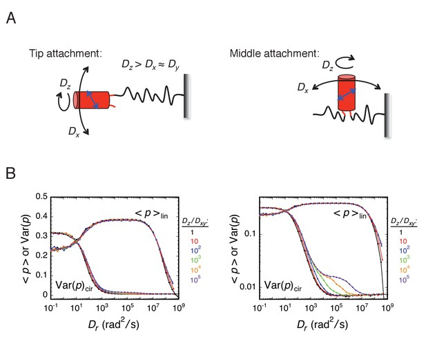 Investigating molecular crowding within nuclear pores using