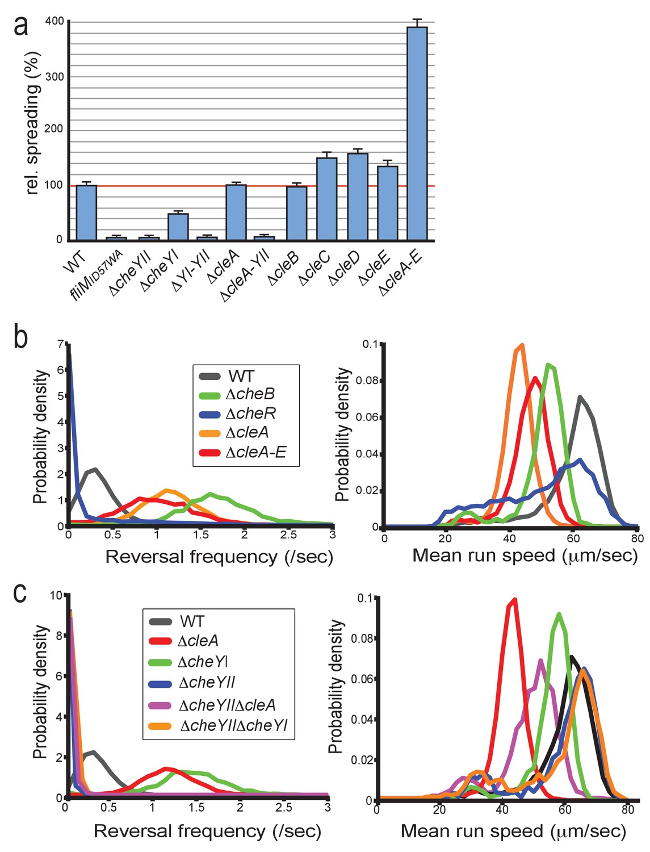 Cyclic di-GMP differentially tunes a bacterial flagellar