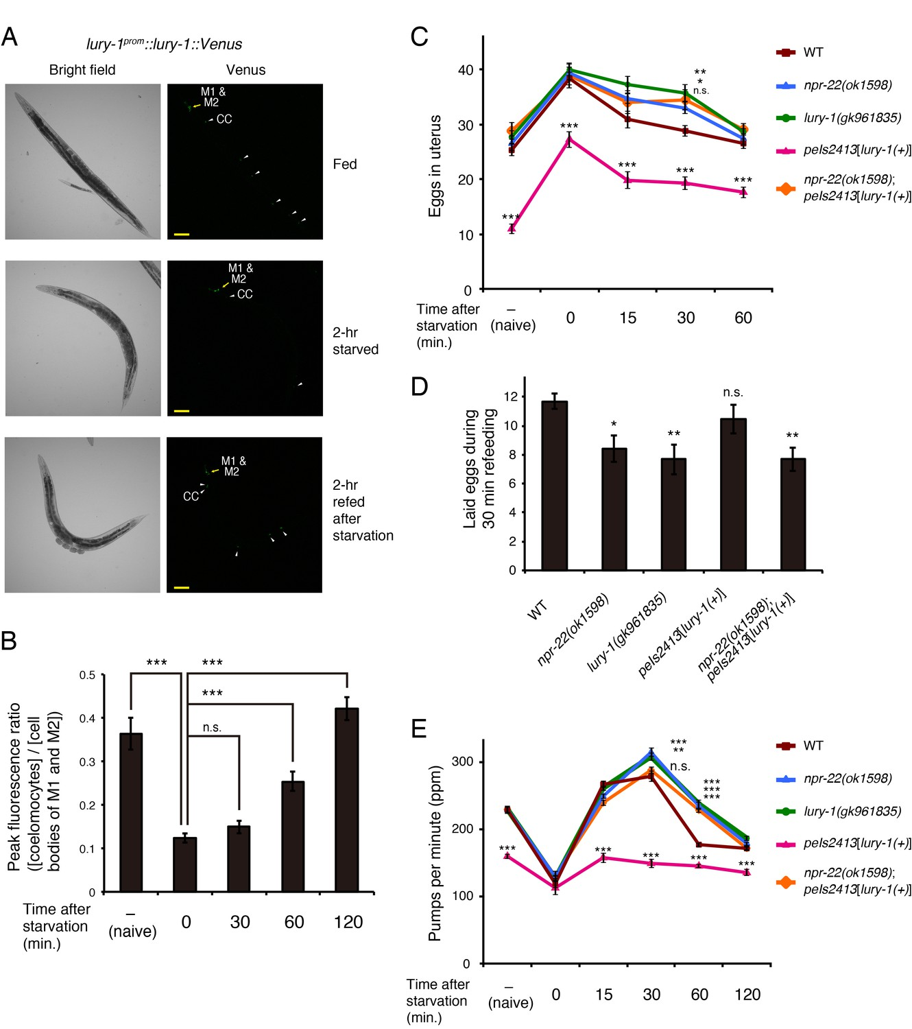 Luqin Like Ryamide Peptides Regulate Food Evoked Responses In C 15v Symmetrical Regulated Power Supply Circuit Diagram Composed Of Lury 1 Are Secreted A Dependent Manner And Essential For Satiety Induced Behavioral Changes